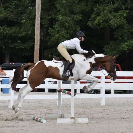 Just A Flirt, Appendix Quarter Horse Mare for sale in Ohio